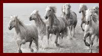 FISE Federazione Italiana Sport Equestri